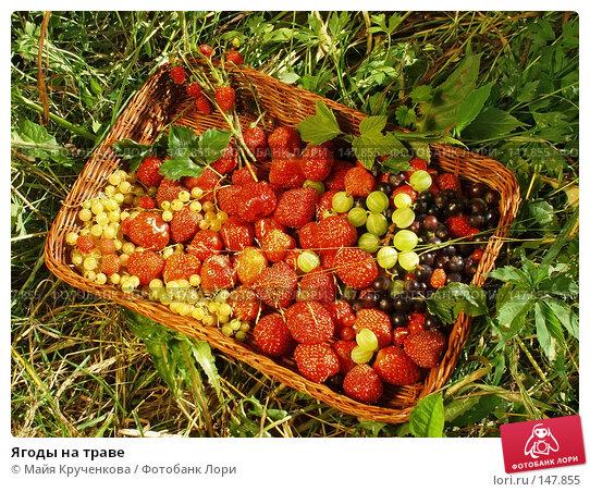 Купить «Ягоды на траве», фото № 147855, снято 20 июня 2007 г. (c) Майя Крученкова / Фотобанк Лори
