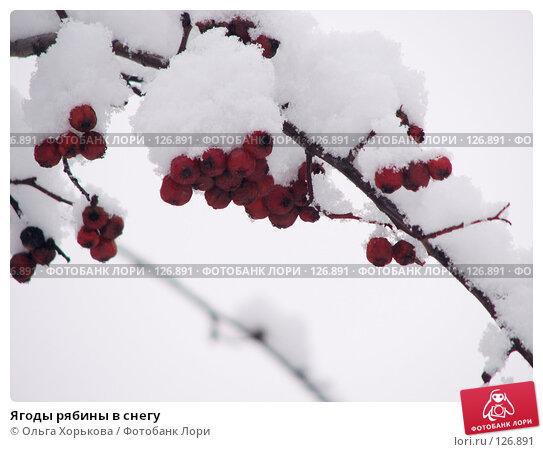 Ягоды рябины в снегу, фото № 126891, снято 16 ноября 2007 г. (c) Ольга Хорькова / Фотобанк Лори
