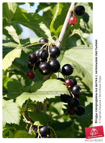 Ягоды смородины на ветке с зелеными листьями, фото № 82631, снято 28 июля 2007 г. (c) Сергей Лешков / Фотобанк Лори
