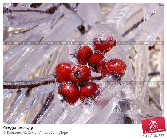 Ягоды во льду, фото № 188587, снято 15 марта 2006 г. (c) Барковский Семён / Фотобанк Лори