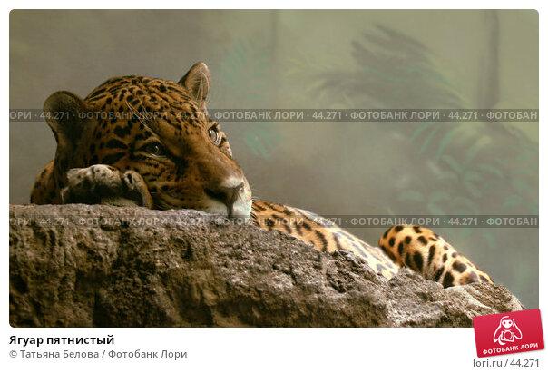 Ягуар пятнистый, фото № 44271, снято 13 февраля 2007 г. (c) Татьяна Белова / Фотобанк Лори