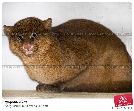 Ягуаровый кот, фото № 134315, снято 10 октября 2004 г. (c) Serg Zastavkin / Фотобанк Лори