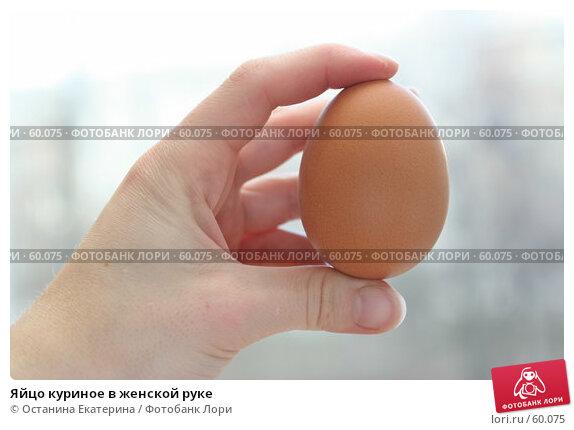 Яйцо куриное в женской руке, фото № 60075, снято 25 октября 2006 г. (c) Останина Екатерина / Фотобанк Лори