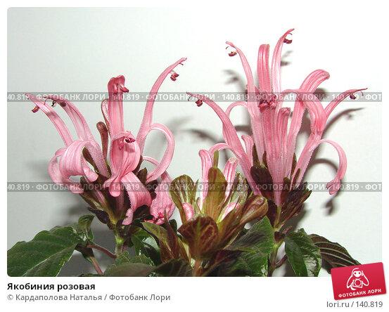 Якобиния розовая, фото № 140819, снято 5 сентября 2007 г. (c) Кардаполова Наталья / Фотобанк Лори