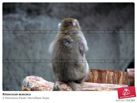 Японская макака, фото № 154583, снято 11 декабря 2007 г. (c) Parmenov Pavel / Фотобанк Лори