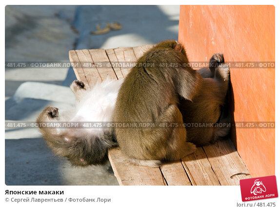Японские макаки, фото № 481475, снято 26 сентября 2008 г. (c) Сергей Лаврентьев / Фотобанк Лори