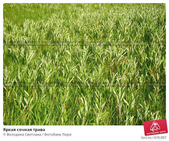 Купить «Яркая сочная трава», фото № 619007, снято 8 мая 2006 г. (c) Володина Светлана / Фотобанк Лори