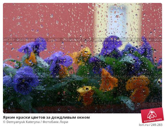 Яркие краски цветов за дождливым окном, фото № 249283, снято 12 апреля 2008 г. (c) Demyanyuk Kateryna / Фотобанк Лори