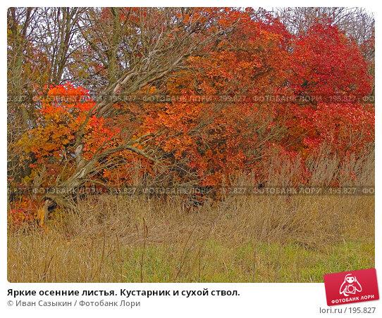 Яркие осенние листья. Кустарник и сухой ствол., фото № 195827, снято 13 ноября 2004 г. (c) Иван Сазыкин / Фотобанк Лори