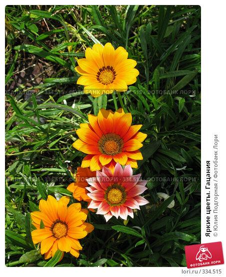 Яркие цветы. Гацания, фото № 334515, снято 11 июня 2008 г. (c) Юлия Селезнева / Фотобанк Лори