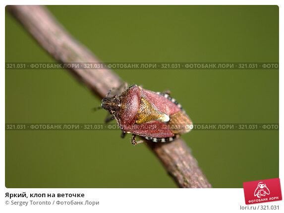 Купить «Яркий, клоп на веточке», фото № 321031, снято 2 мая 2008 г. (c) Sergey Toronto / Фотобанк Лори