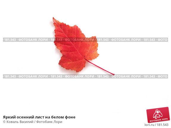 Яркий осенний лист на белом фоне, фото № 181543, снято 18 октября 2006 г. (c) Коваль Василий / Фотобанк Лори