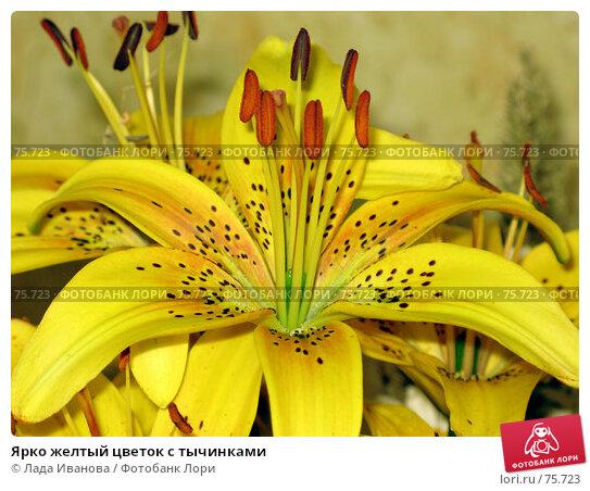 Ярко желтый цветок с тычинками, фото № 75723, снято 20 июля 2007 г. (c) Лада Иванова / Фотобанк Лори