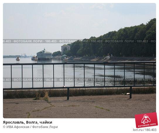 Ярославль, Волга, чайки, фото № 180403, снято 10 июля 2006 г. (c) ИВА Афонская / Фотобанк Лори