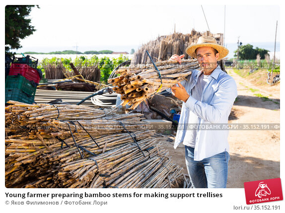 Young farmer preparing bamboo stems for making support trellises. Стоковое фото, фотограф Яков Филимонов / Фотобанк Лори