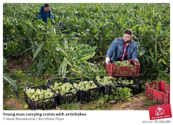 Young man carrying crates with artichokes. Стоковое фото, фотограф Яков Филимонов / Фотобанк Лори