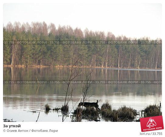За уткой, фото № 33755, снято 17 апреля 2007 г. (c) Осиев Антон / Фотобанк Лори