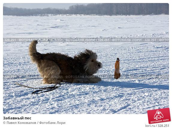 Забавный пес, фото № 328251, снято 7 января 2008 г. (c) Павел Коновалов / Фотобанк Лори