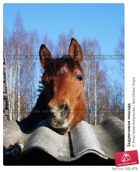 Задумчивая лошадь, фото № 242479, снято 25 марта 2007 г. (c) Анастасия Некрасова / Фотобанк Лори