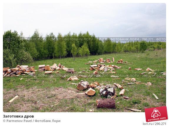 Заготовка дров, фото № 290271, снято 11 мая 2008 г. (c) Parmenov Pavel / Фотобанк Лори