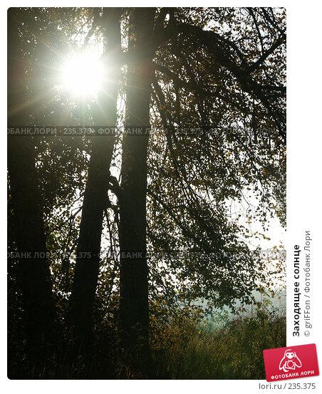 Заходящее солнце, фото № 235375, снято 25 сентября 2006 г. (c) griFFon / Фотобанк Лори