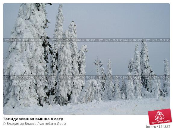 Купить «Заиндевевшая вышка в лесу», фото № 121867, снято 28 февраля 2007 г. (c) Владимир Власов / Фотобанк Лори