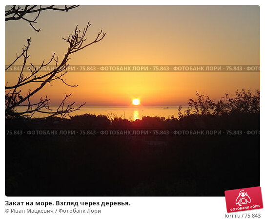 Купить «Закат на море. Взгляд через деревья.», фото № 75843, снято 5 октября 2006 г. (c) Иван Мацкевич / Фотобанк Лори