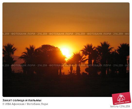 Закат солнца и пальмы, фото № 216259, снято 26 сентября 2007 г. (c) ИВА Афонская / Фотобанк Лори