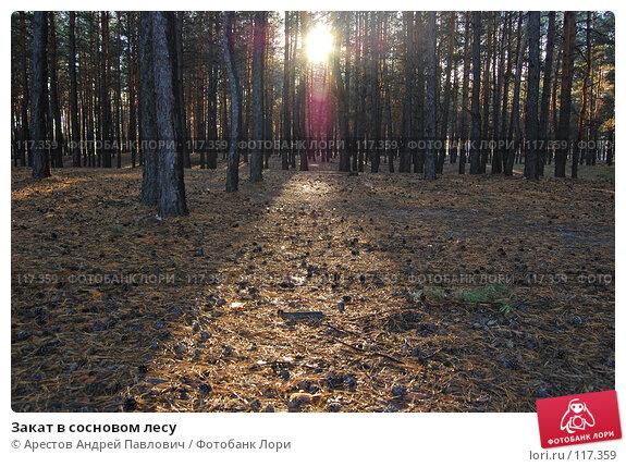 Закат в сосновом лесу, фото № 117359, снято 4 ноября 2007 г. (c) Арестов Андрей Павлович / Фотобанк Лори