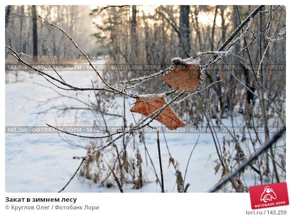 Закат в зимнем лесу, фото № 143259, снято 5 декабря 2007 г. (c) Круглов Олег / Фотобанк Лори