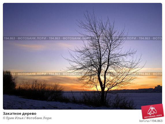 Закатное дерево, фото № 194863, снято 9 декабря 2016 г. (c) Ерин Илья / Фотобанк Лори