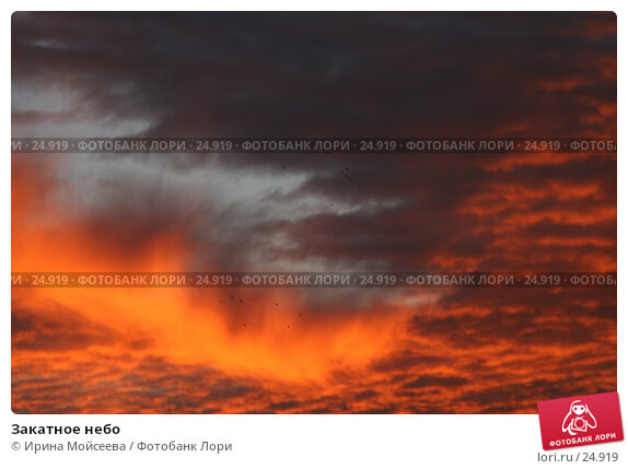 Закатное небо, эксклюзивное фото № 24919, снято 2 декабря 2005 г. (c) Ирина Мойсеева / Фотобанк Лори