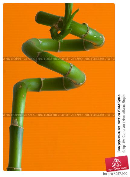 Закрученная ветка бамбука, фото № 257999, снято 19 апреля 2008 г. (c) Артём Сапегин / Фотобанк Лори