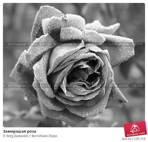 Замерзшая роза, фото № 135115, снято 15 сентября 2005 г. (c) Serg Zastavkin / Фотобанк Лори
