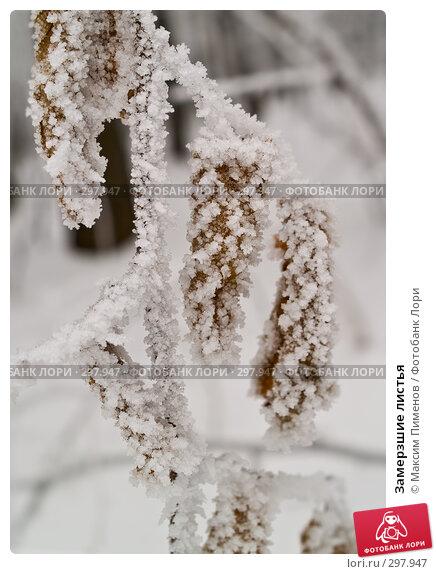 Замерзшие листья, фото № 297947, снято 19 января 2008 г. (c) Максим Пименов / Фотобанк Лори