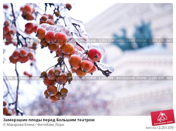 Купить «Замерзшие плоды перед Большим театром», эксклюзивное фото № 2251379, снято 29 декабря 2010 г. (c) Макарова Елена / Фотобанк Лори