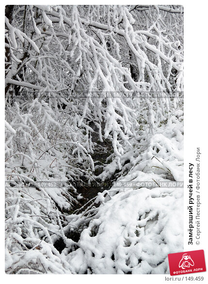Замёрзший ручей в лесу, фото № 149459, снято 14 октября 2007 г. (c) Сергей Пестерев / Фотобанк Лори