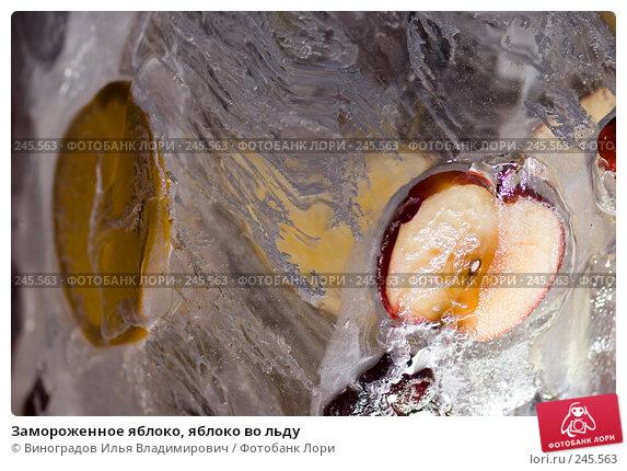 Замороженное яблоко, яблоко во льду, фото № 245563, снято 7 декабря 2007 г. (c) Виноградов Илья Владимирович / Фотобанк Лори