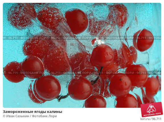 Купить «Замороженные ягоды калины», фото № 96711, снято 5 декабря 2003 г. (c) Иван Сазыкин / Фотобанк Лори