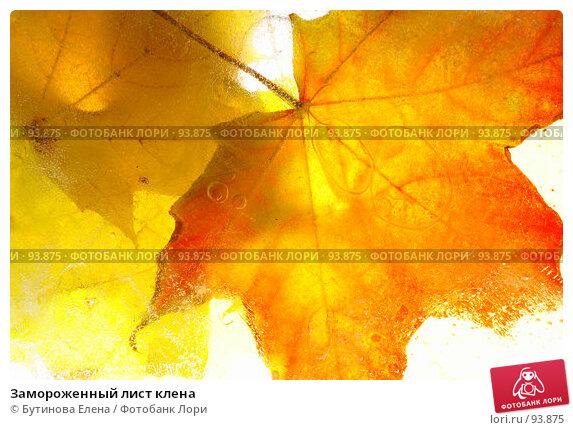 Купить «Замороженный лист клена», фото № 93875, снято 6 октября 2007 г. (c) Бутинова Елена / Фотобанк Лори