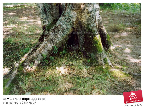 Замшелые корни дерева, фото № 2655, снято 24 января 2017 г. (c) Estet / Фотобанк Лори