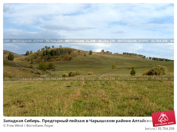 Западная Сибирь. Предгорный пейзаж в Чарышском районе Алтайского края. Стоковое фото, фотограф Free Wind / Фотобанк Лори
