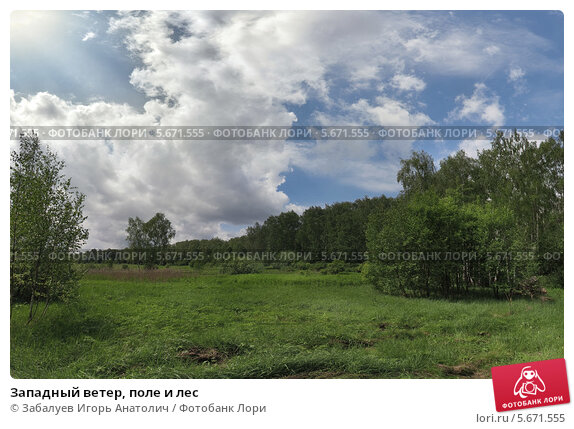 Купить «Западный ветер, поле и лес», фото № 5671555, снято 19 февраля 2019 г. (c) Забалуев Игорь Анатолич / Фотобанк Лори