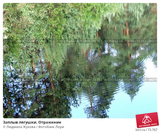 Купить «Заплыв лягушки. Отражение», фото № 73767, снято 11 июля 2007 г. (c) Людмила Жукова / Фотобанк Лори