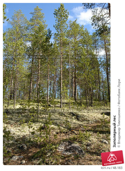 Заполярный лес, фото № 48183, снято 27 мая 2007 г. (c) Владимир Тимошенко / Фотобанк Лори