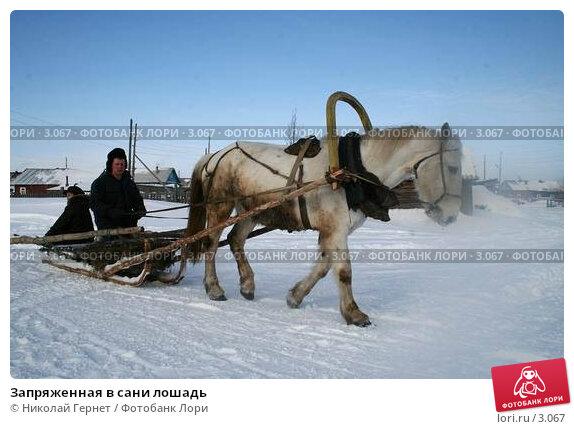 Запряженная в сани лошадь, фото № 3067, снято 25 марта 2006 г. (c) Николай Гернет / Фотобанк Лори