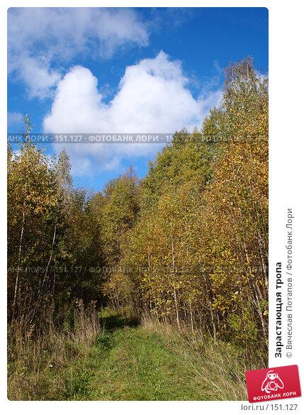 Зарастающая тропа, фото № 151127, снято 8 октября 2006 г. (c) Вячеслав Потапов / Фотобанк Лори