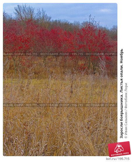 Заросли боярышника. Листья опали. Ноябрь, фото № 195715, снято 13 ноября 2004 г. (c) Иван Сазыкин / Фотобанк Лори