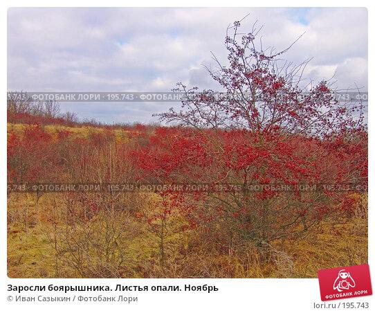 Заросли боярышника. Листья опали. Ноябрь, фото № 195743, снято 13 ноября 2004 г. (c) Иван Сазыкин / Фотобанк Лори