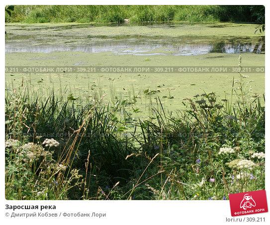 Заросшая река, фото № 309211, снято 2 августа 2006 г. (c) Дмитрий Кобзев / Фотобанк Лори